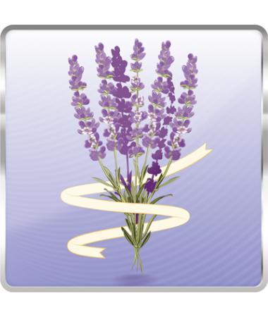 Lavender-Solo/Dual (Beyaz)