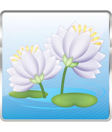 Waterlily-Solo/Dual (Beyaz)